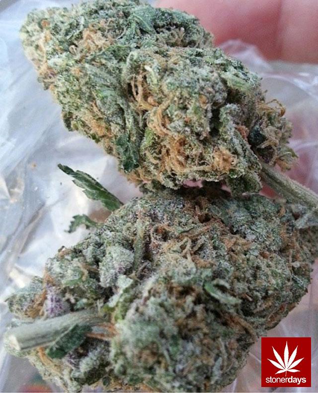 stonerdays-stayblazed-marijuana-pipes-joints-blunts-weed (81)