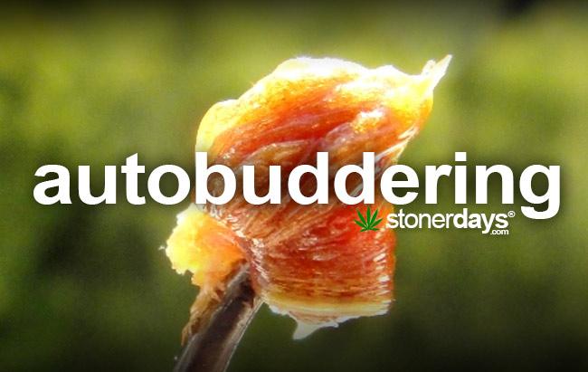 autobuddering