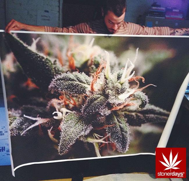 blunts-bongs-marijuana-pot-stonerdays (374)