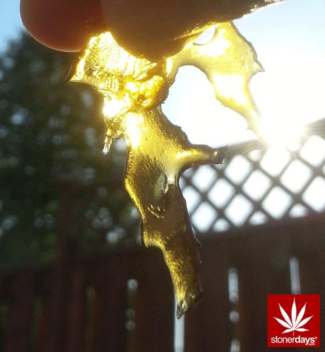 blunts-bongs-marijuana-pot-stonerdays (452)