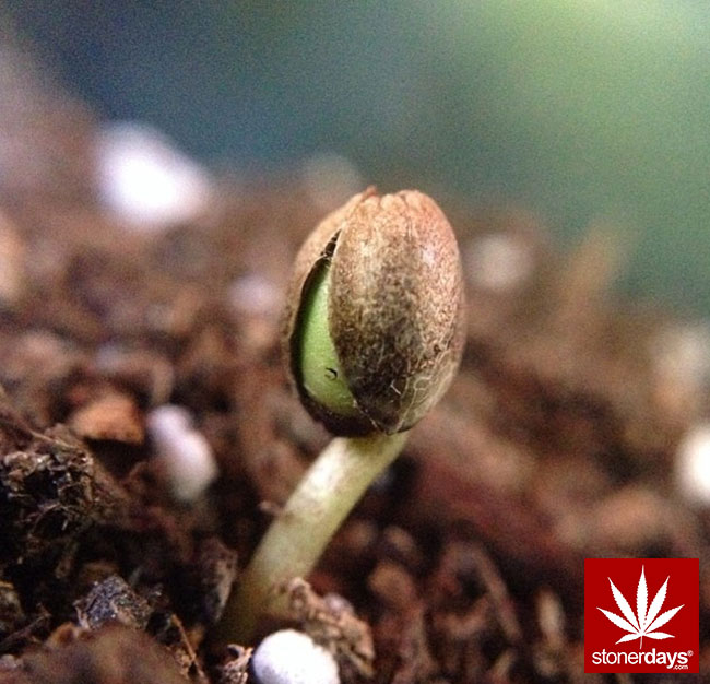 blunts-bongs-marijuana-pot-stonerdays (68)