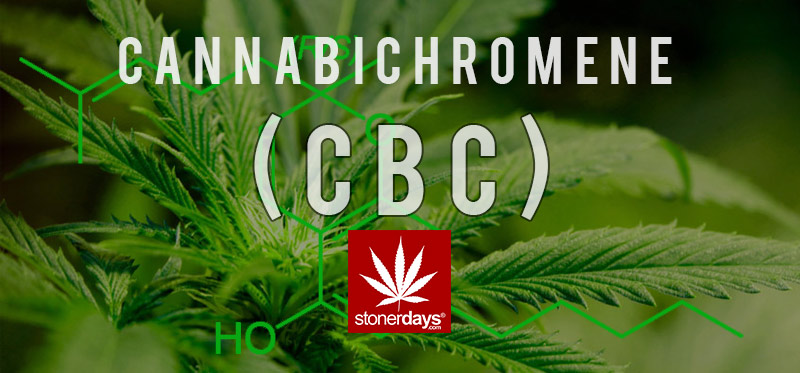 cbc-marijuana-stonerdays