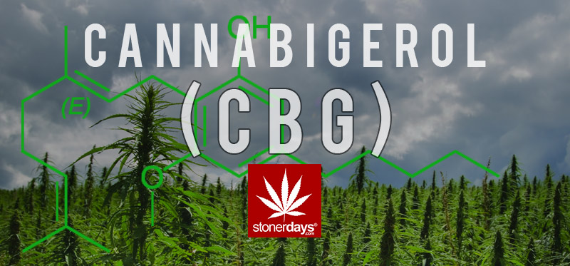 cbg-marijuana-stonerdays
