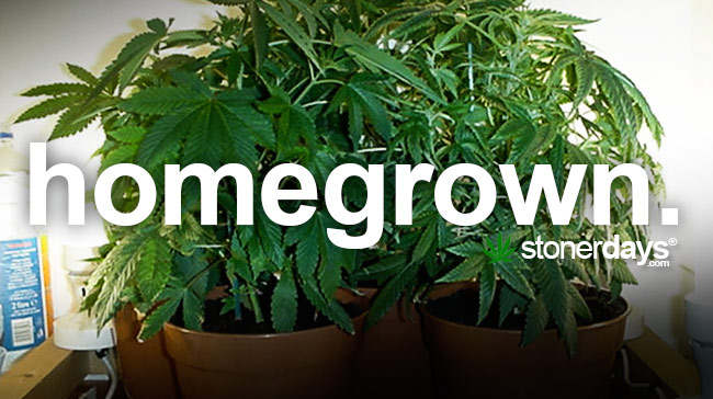 homegrown-marijuana-term