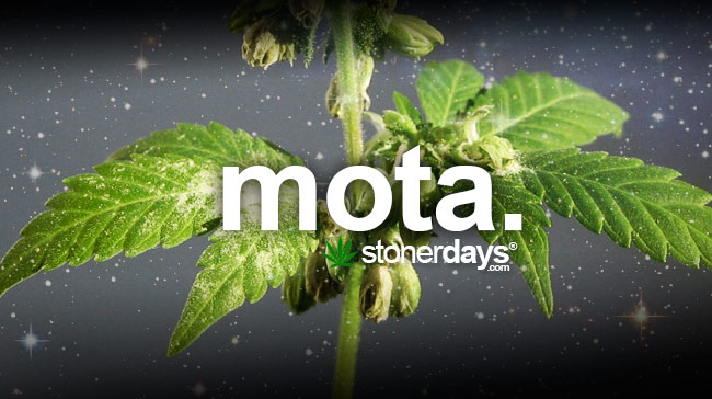 mota-marijuana
