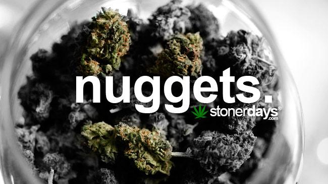 nuggets-of-marijuana