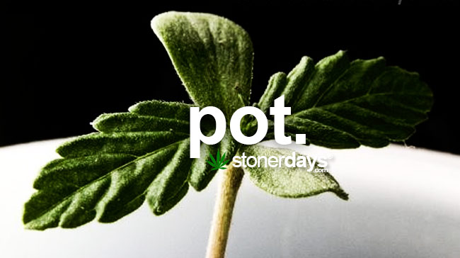 pot-marijuana-slang