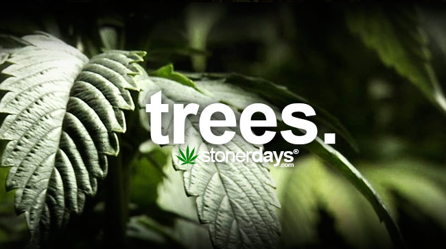trees-marijuana-slang