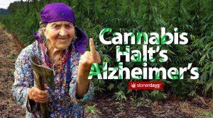 cannabis-alzheimer