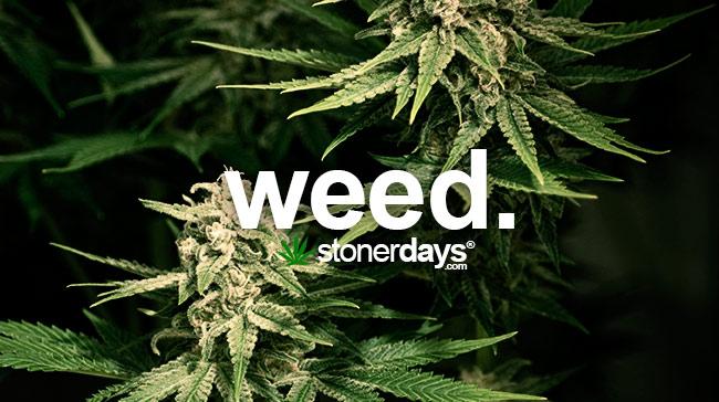 weed-marijuana-slang