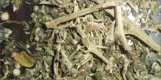 stoner seeds and stems marijuana