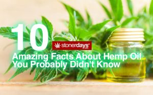 Amazing Facts About Hemp Oil You Probably Didn't Know