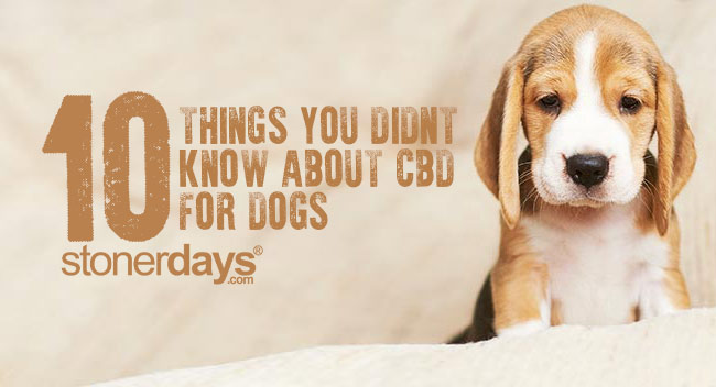 Things-You-Didn't-Know-About-CBD-for-Dogs
